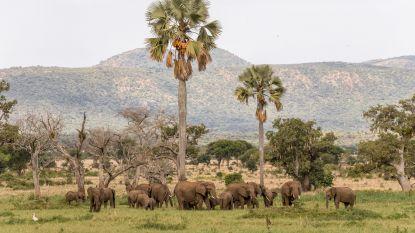 In het hart van Afrika