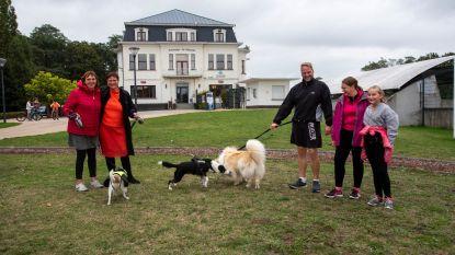 Hondenliefhebbers dienen petitie in voor hondenloopweide in centrum Wetteren