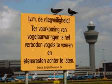 Actiegroepen sturen brandbrief naar minister: 'Vliegen vanaf Lelystad Airport te gevaarlijk'