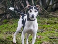 Hond gestolen uit dierenasiel: 'Waarom heeft iemand er baat bij om Bobby te stelen?'