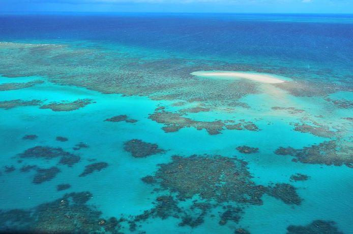 Het Great Barrier Reef in Australië loopt groot gevaar.