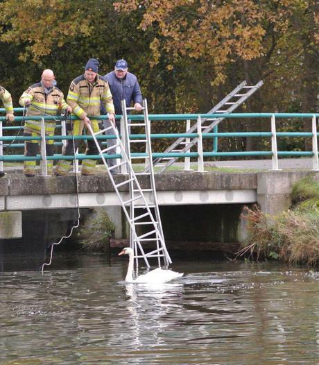 Brandweer redt zwaan met gebroken vleugel bij Dalfsen