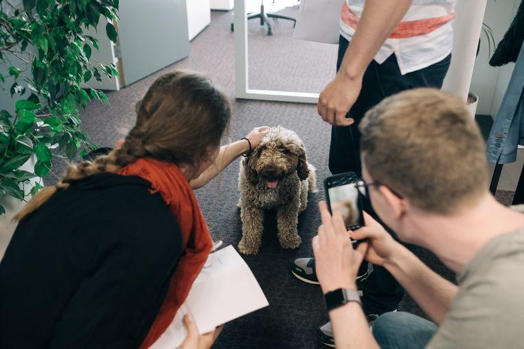 Pipa krijgt alle aandacht van de collega's op de redactievloer. Beeld Wouter Van Vooren