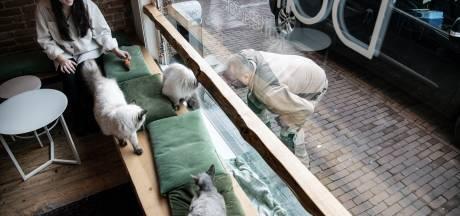 'Werkloze' katten van kattencafé Balthazar missen de klanten
