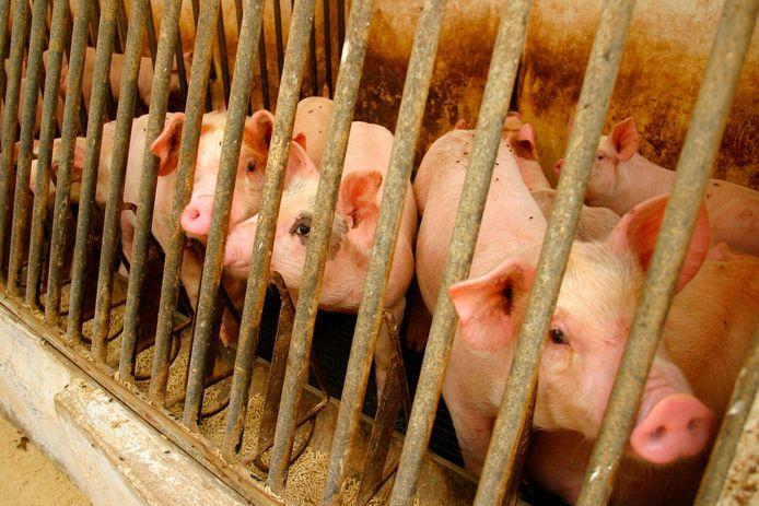 En termes de poids, les porcs occupent la plus grande part (61%) avec un peu moins de 1,1 milliard de kg sur l'ensemble de l'année.