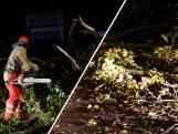 Bomen en takken blokkeren de wegen na stormachtige nacht