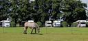 De camperplaats Lingewaard bij het buurtschap Flieren in Gelderland, aangelegd op een deel van een weiland.