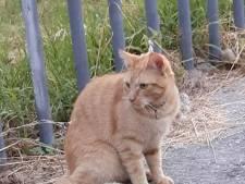 IJsselsteinse kat DJ Karel overleden door vuurwerk in achterwerk