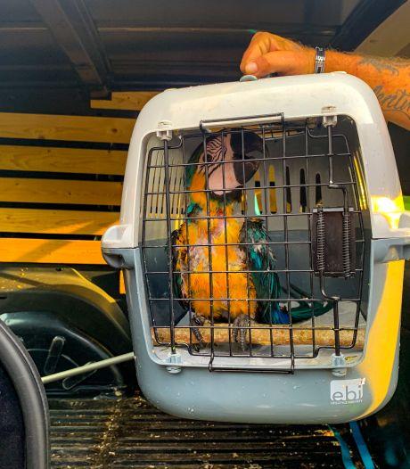 Apeldoornse ara zoekt het hogerop, brandweer rukt twee keer uit om gevlogen vogel te redden