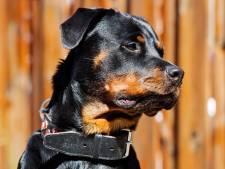 Hond wekt baasje om inbraak in Meeuwen