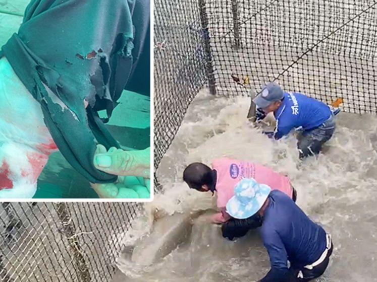 Het onthutsende moment waarop haai verzorger bijt