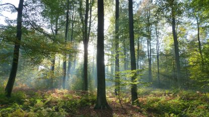 Mysterieuze bossen: Lichtfeest in het bos