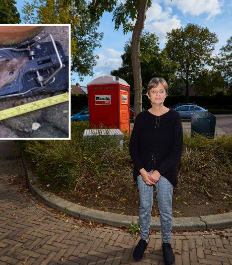José uit Zutphen is rattenoverlast spuugzat, eindelijk actie na noodkreet: 'Vreselijk, ik ben als de dood voor die beesten'