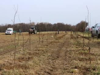 """Natuur en Bos plant op twee dagen 4.000 nieuwe bomen: """"Willen tegen 2024 zo een 4.000 hectare extra bos"""""""