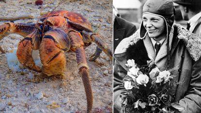 Zorgden kokoskrabben voor de verdwijning van Amelia Earhart?