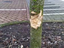 Bomen met scherp voorwerp vernield op Urk