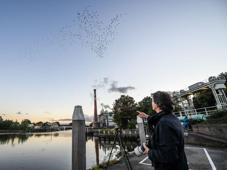 Dansende spreeuwen geven indrukwekkende show weg boven Gouda