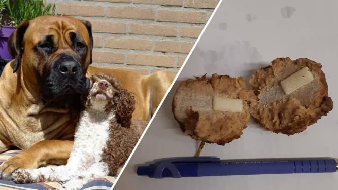 Kijk uit wat je hond eet in het bos! Vergiftiging kan nare gevolgen hebben