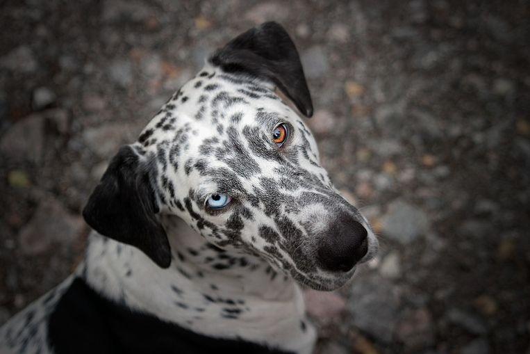 ''Let's go – much as that dog goes, intently haphazard.' Dat zou mijn levensmotto kunnen zijn.' Beeld