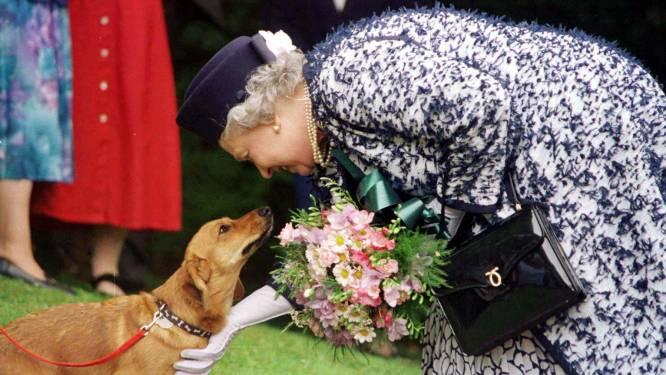 Queen Elizabeth haalt op haar 94ste dan toch nog twee hondjes in huis