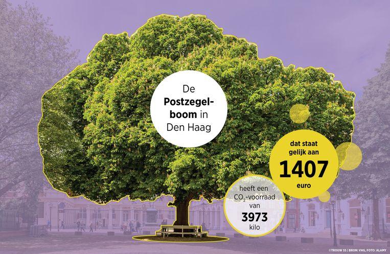 i-tree bomen waarde Beeld Trouw