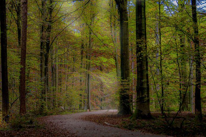 La forêt de Buggenhout, en Flandre-Orientale.