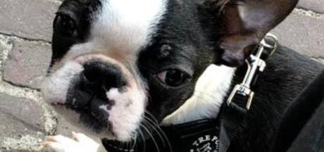 Puppy Karel uit bench gestolen: 'Dit is een nachtmerrie'