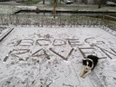 In Bodegraven viel 1 centimeter sneeuw, schrijft Jeroen Kok. Flint bewaakt de tekst.