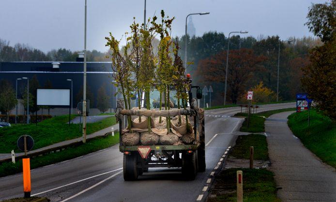Loonbomen op transport, ergens in de Betuwe.