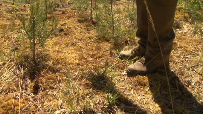 """Zo kurkdroog is het in natuurgebieden: """"Het mos kraakt onder je voeten"""""""