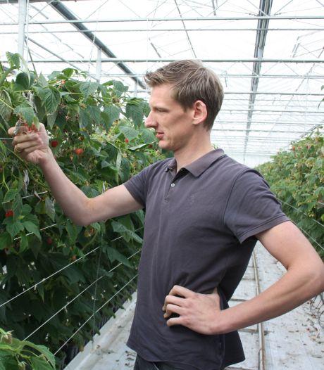 Broers Van Tuijl stappen door torenhoge gasprijs versneld over van paprika's op aardbeien en frambozen
