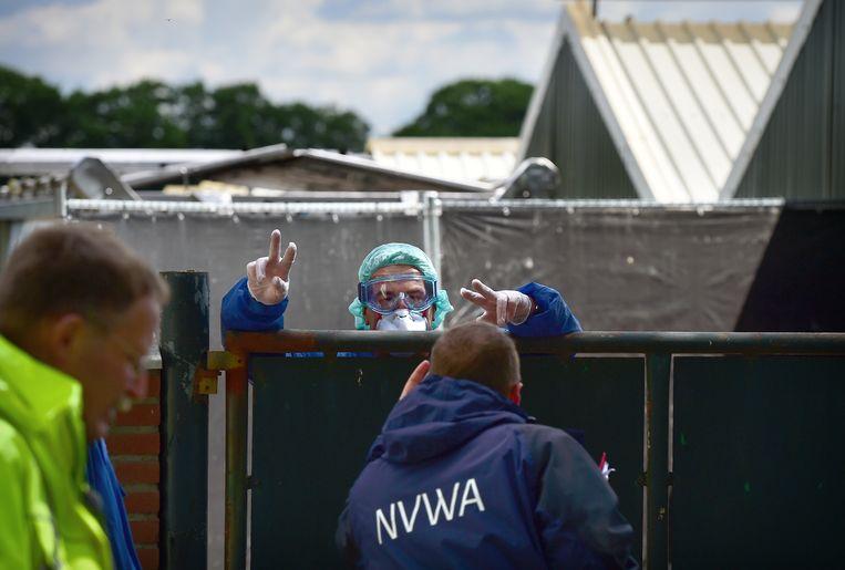 Ruimers van de NVWA aan het werk bij de nertsenfokkerij in Deurne. Beeld Marcel van den Bergh / de Volkskrant
