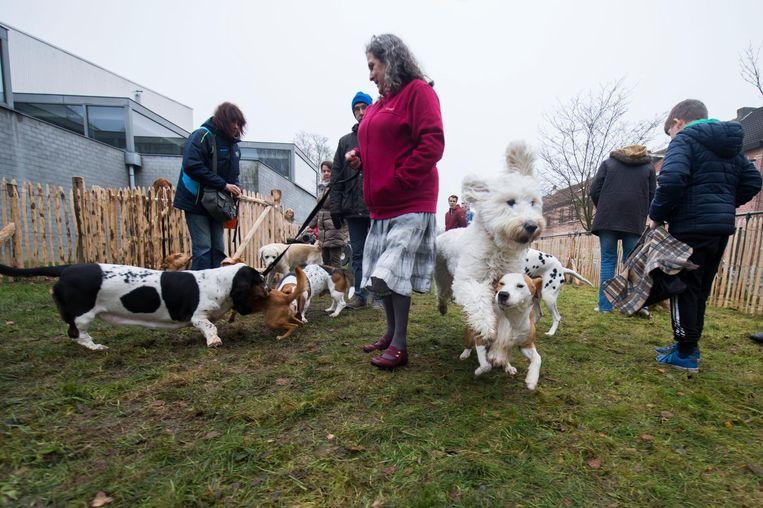 Honden sprongen van blijdschap over elkaar, de baasjes zagen dat het goed was.
