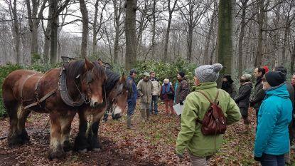 Trekpaarden werken in Markettebossen