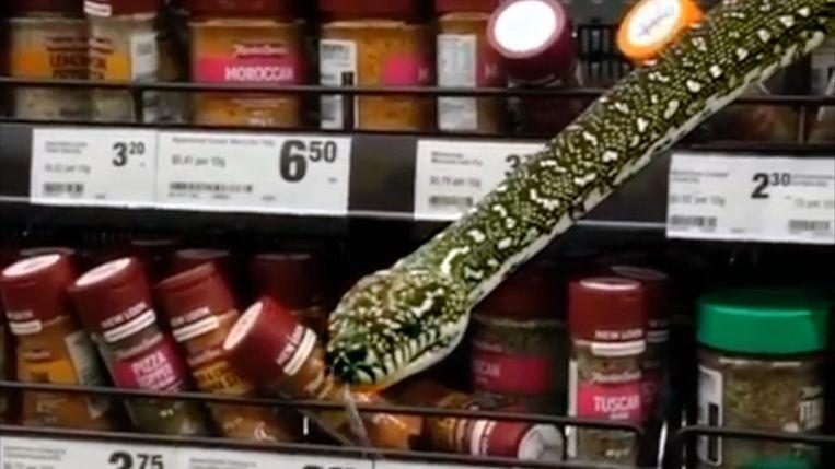 De bewuste slang kwam uit het kruidenrek gekropen. Beeld Helaina Alati/Hilary Leigh