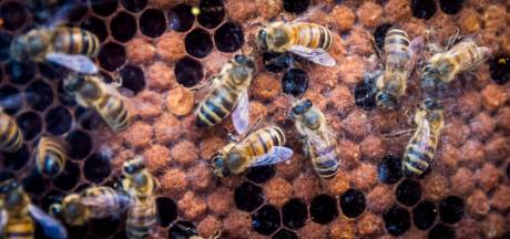 Oosterhoutse bijenhouders: 'Stel stadsecoloog aan'