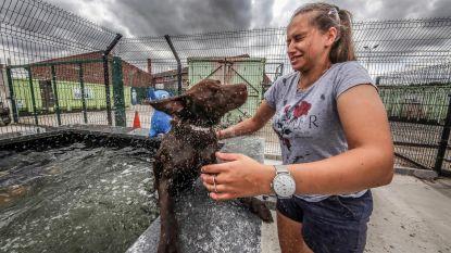 Bestuur wil tegen volgend jaar hondenzwemzone