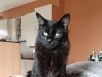 500 euro beloning voor wie kat Jinxy terugvindt