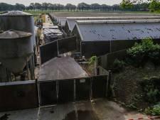 Ruiming eerste nertsenbedrijf is gestart, duizenden dieren vergast in Deurne