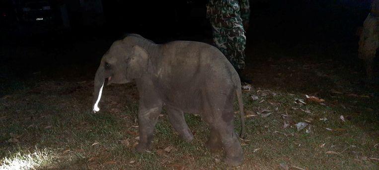 Het jong werd later opnieuw herenigd met zijn moeder en de rest van de kudde. Beeld via REUTERS