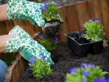 Weg met die tegels! Je tuin vergroenen levert volgend jaar geld op