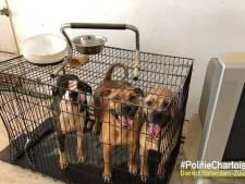 Man aangehouden voor verwaarlozing honden in Zuidwijk