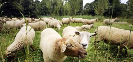 Oosterhout wil meer insecten en gaat duurzamer maaien