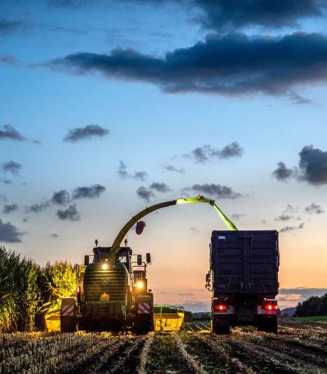 Last minute uitstel maisoogst voor veel boeren te laat: 'Kwaliteit kuilvoer onvoldoende'