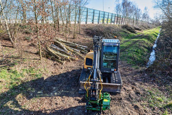 Het kapwerk op het talud van de A16 aan de kant van de Rijsbergseweg in Breda is stilgelegd.