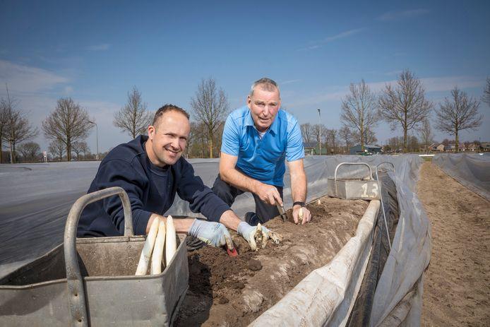 """Martin Zieleman en schoonvader Herman Ogink van Ogink Asperges uit Raalte zijn bijna klaar voor het aspergeseizoen. ,,Volgende week gaat de winkel weer open,  er zijn er nog niet zoveel."""""""