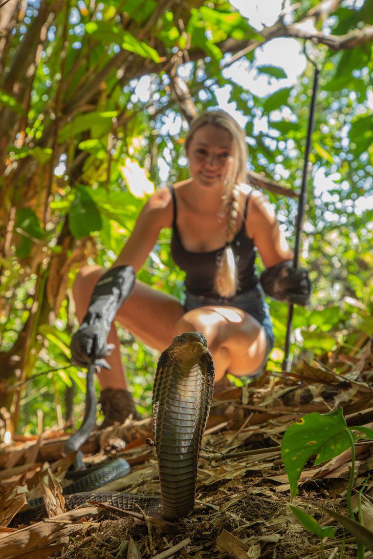 Ecoloog Sterrin Smalbrugge met een vrouwelijke koningscobra op Bali.  Beeld Jason Savage