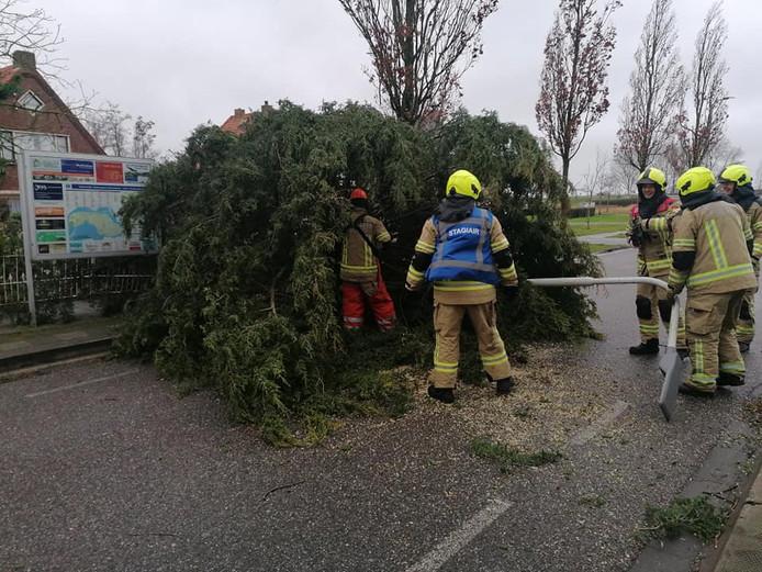 De boom aan de Molenweg in Oosterland nam een lantaarnpaal mee in zijn val.