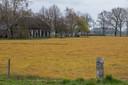 Een met Roundup bespoten weiland bij Raalte.