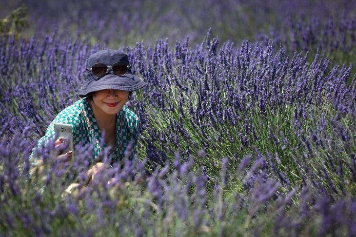 Een toerist neemt een selfie in een lavendelveld in het zuiden van Frankrijk.